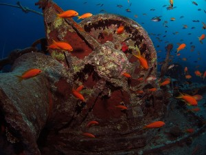 A wreck in the Red Sea title=