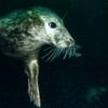 Dancing with Seals: Farnes Islands, 18–20 September 2021