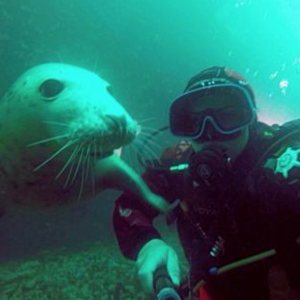 Seal with a diver title=