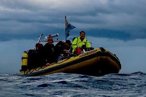 Clidive Yellow at St Abbs in 2019 title=